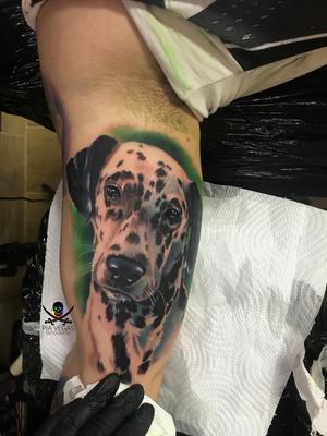 Dalmatiner dog portrait in Farbe