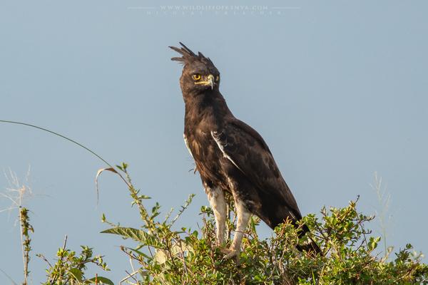 Mara Triangle National Reserve