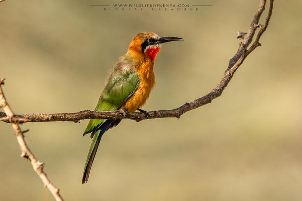 Nakuru National Park