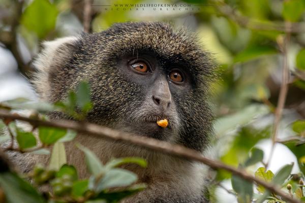 Karura Forest, Nairobi