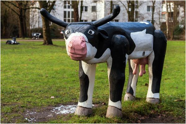 Kühe beim Bezirksamt Nord