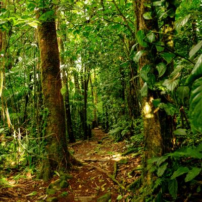 boostez les télomères en profitant de l'énergie d'une promenade en pleine forêt