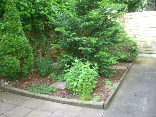 Der Garten vorher.