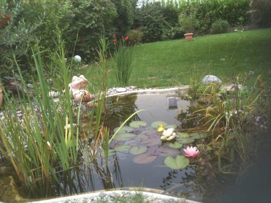 Der Teich nach 2 Jahren