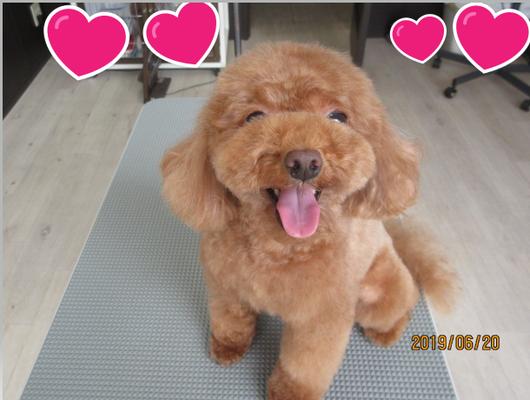 犬の保育園Baby・犬・犬のしつけ・犬の社会化・トリミング