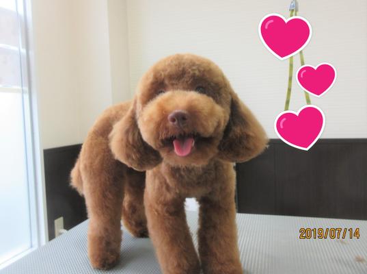 犬の保育園Baby・犬・トリミング