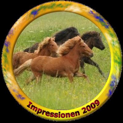 klick auf Impressionen 2009