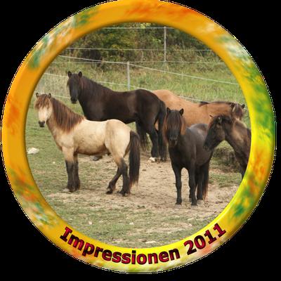 klick auf Impressionen 2011