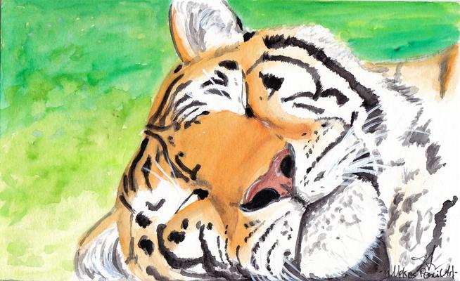 sleepy Tiger A5 - 2015 vergeben