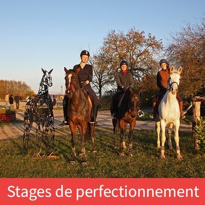 Stages de perfectionnement équitation