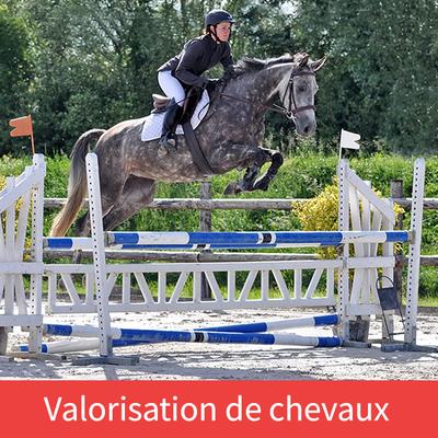 Ecurie les Rouillons, travail et valorisation de votre cheval de CCE à Sens