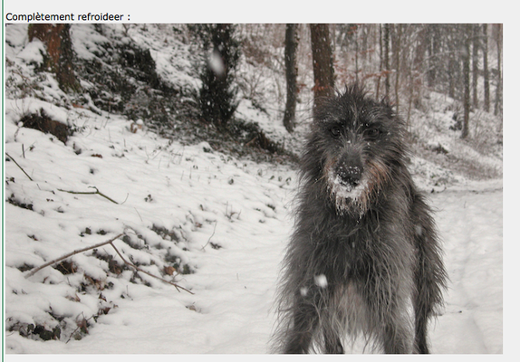 abobidog des neiges / french pun