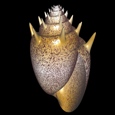 3D Cymbiola chrysostoma
