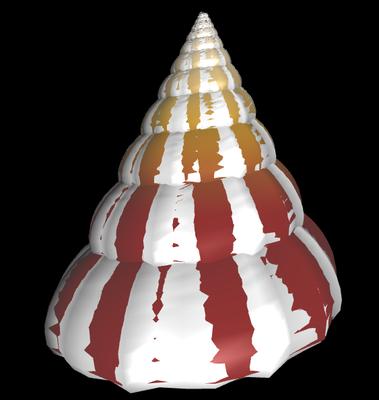 3D Tectus conus