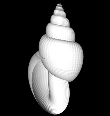 3D Triton (sinistral)
