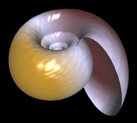 3D Planorbis