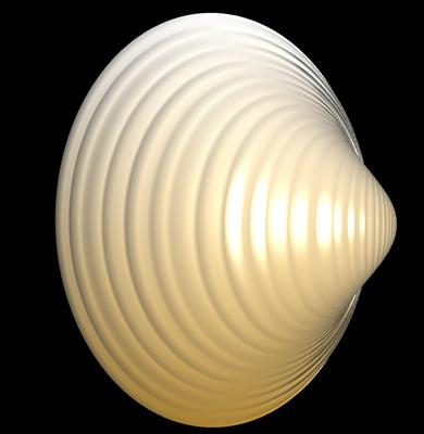 3D Spisula solida