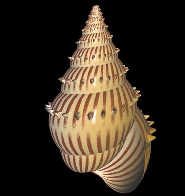 3D Struthiolaria