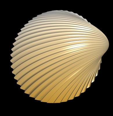 3D Herzmuschel