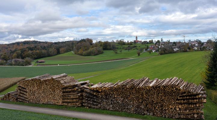 2019 Woche 49, bei Brütten Borkenkäfer-Holz