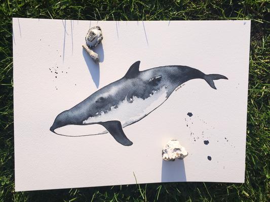 Schweinswal mit Seewasser von Fehmarn gemalt