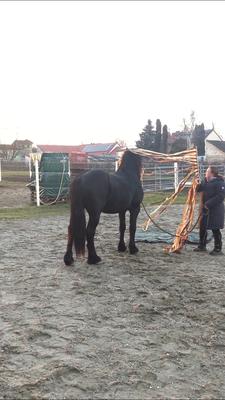 GHP Training