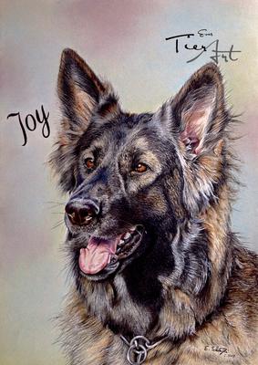 Deutscher Schäferhund Joy, A3