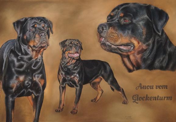 Rottweiler, Collage mit Schrift, 70x100cm