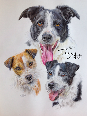 Border Collie Sippy, Parson Russell Terrier Upps und Lenny, A2