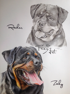 Rottweiler Racker und Zaky, A2, Skizze und Buntstift kombiniert