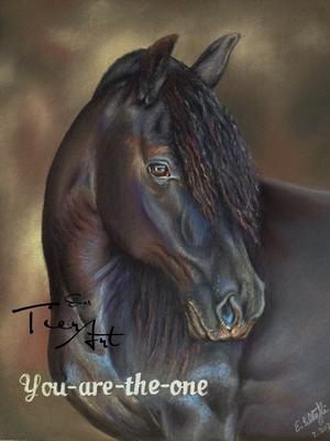 Canadian Horse, 24x30cm, Foto Silvio Maraini