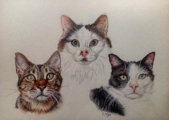 Drei Katzen, A3