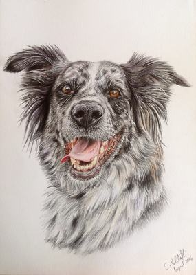 Border Collie Lynn, A4