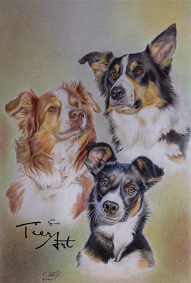 Australian Shepherd Lilly und Border Collies Choice und Bagira, 30.5x45cm