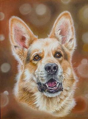 Deutscher Schäferhund Rocky, A4
