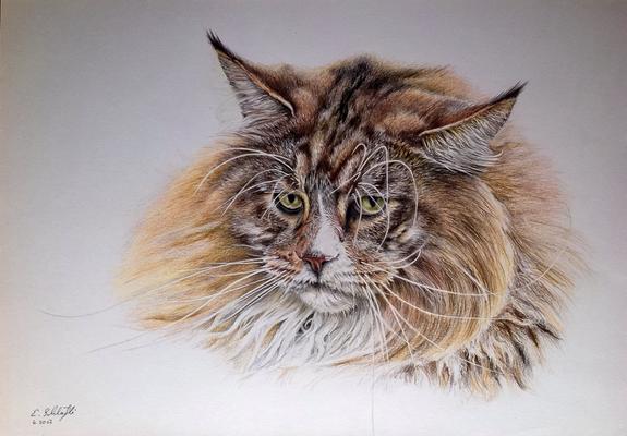 Kater Felix (Norwwegische Waldkatze), A4