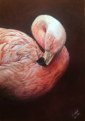 Flamingo, Pastell/Buntstift, A3, Foto Andy Wilson, wildlifereferencephotos.com