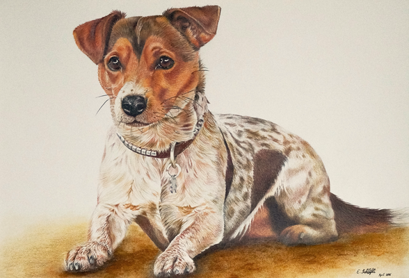 JackRussel Terrier-Mischling, A4