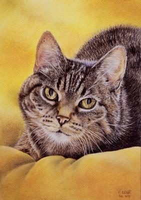 Katze Kitty, A4