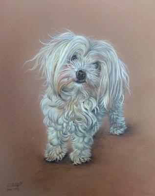 Kleiner weisser Hund, Buntstift auf Pastelmat, 24x30cm