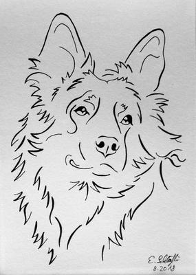 Chodenländerhund Emba, reduzierte Skizze, Fineliner, A5
