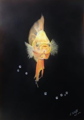 Kampffisch, Hintergrund Airbrush, A3