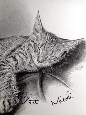 Katze Mischi, A4
