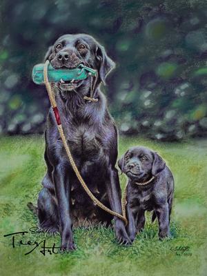 Labrador Retriever Esprit und Alinghi, 23x30.5cm, Foto Anette Bryner