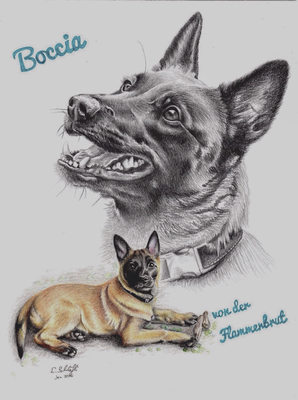 Malinois Boccia, Collage Bleistift/Buntstift, A4