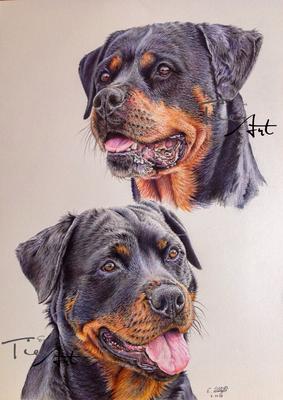 Rottweiler Yuna und Tessa, A3