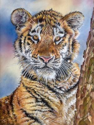 Tigerkind im Schnee, Pastell, 30x40cm, Foto Stephanie Swayne