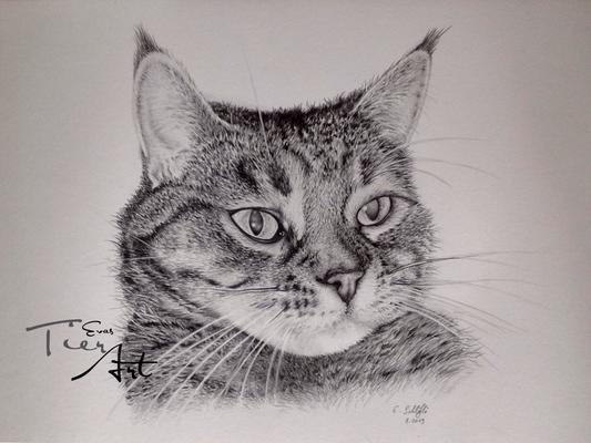 Katze Bella, A3