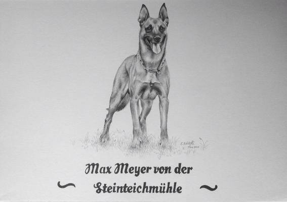 Malinois Max Meyer, A4
