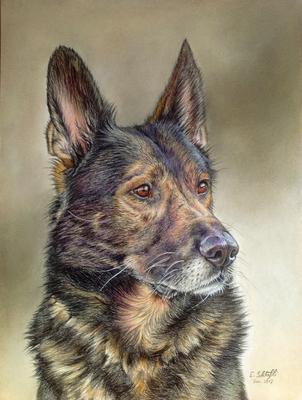 Deutscher Schäferhund, A4